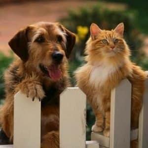 Une mutuelle pour votre chien et votre chat