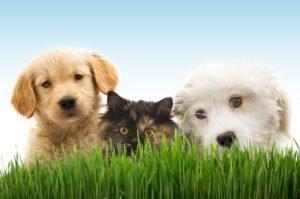 Assurance pour votre chien et votre chat