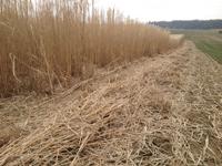 Biomasse énergétique - source photos conseils-thermiques.org