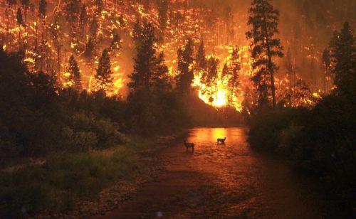 assurance habitation incendie foret